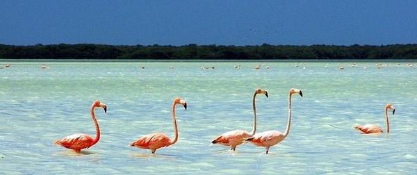 Celestún, el paraíso de Mérida